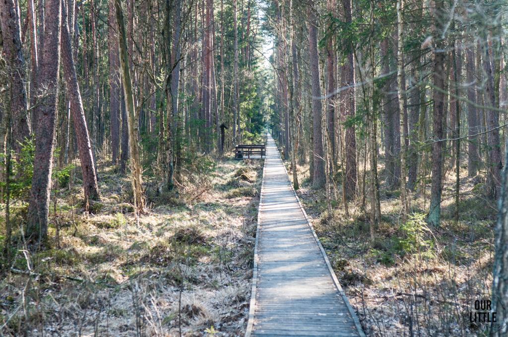Ścieżka przez bagna w Biebrzańskim Parku Narodowym