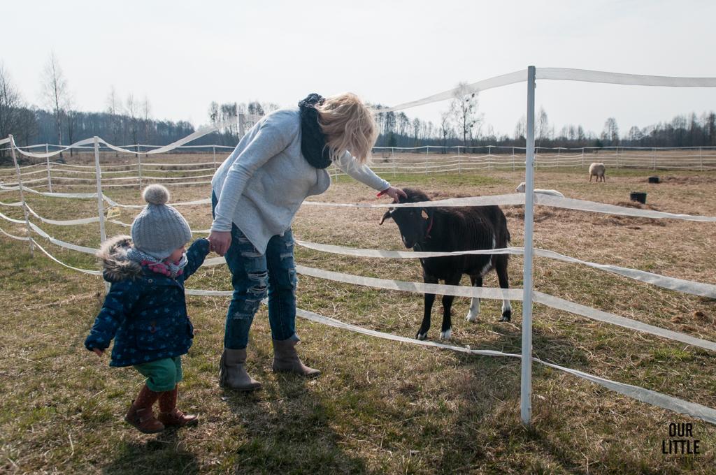 Mania i Karolina na terenie Zagrody Kuwasy głaszczą kozę