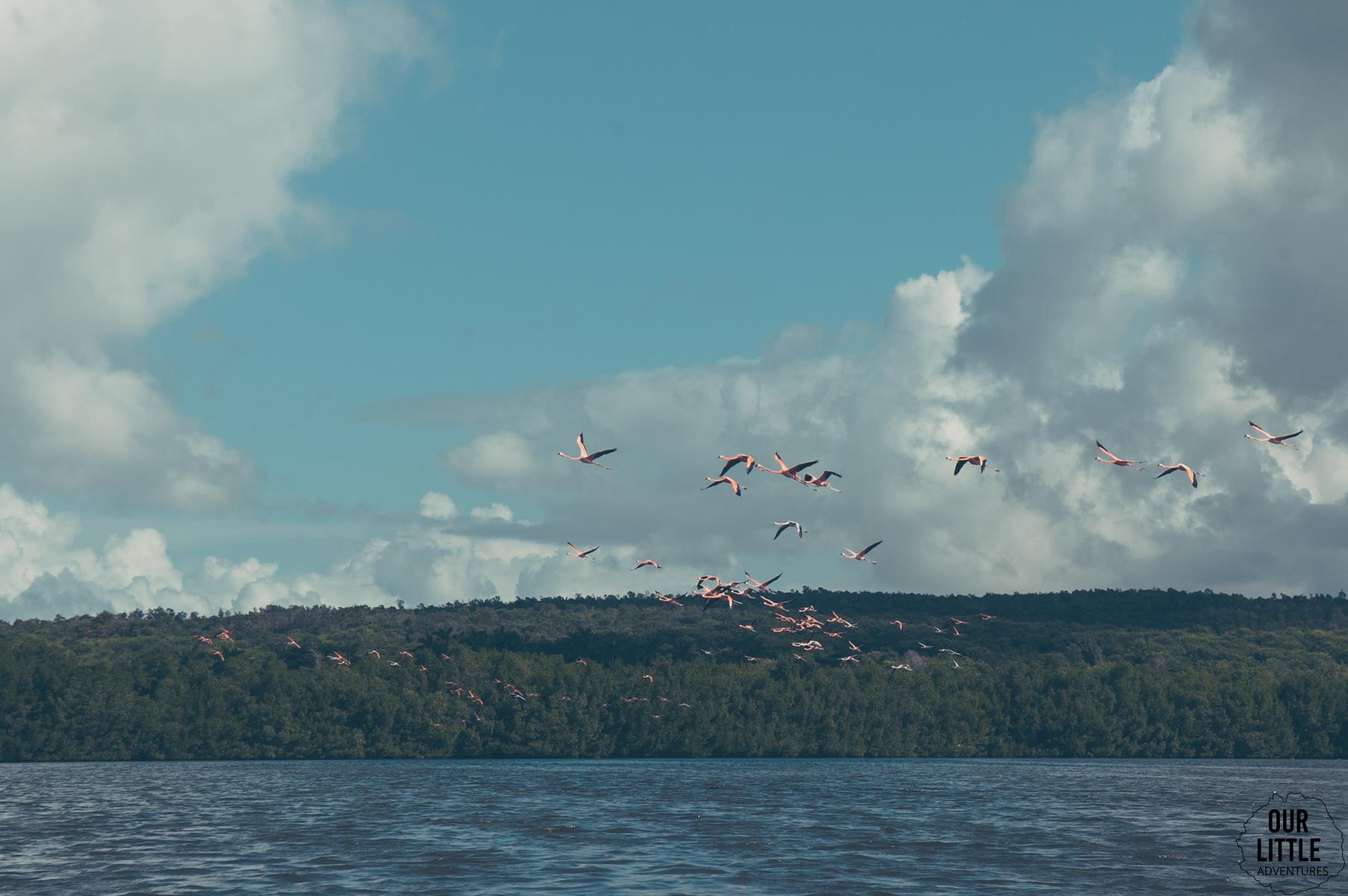 flamingi w locie  - laguna guanaroca
