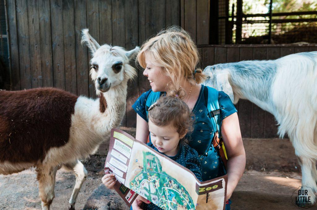 Karolina w otoczeniu kóz z zoo w Tel-Awiwie. Marianka siedzi jej na kolanach i przegląda mapę zoo