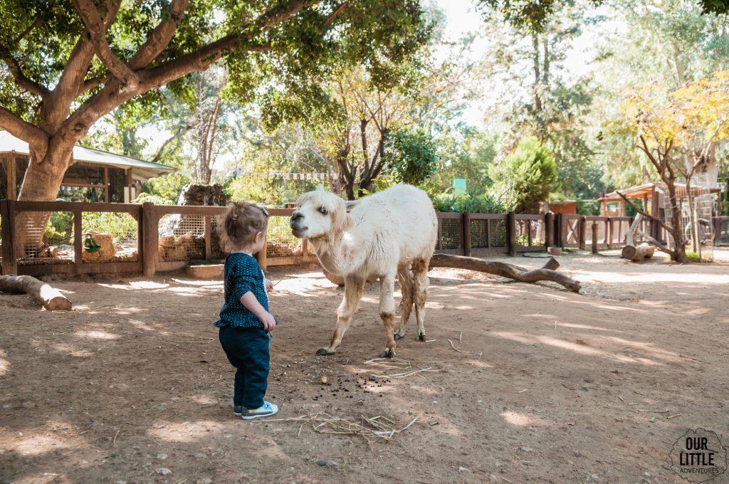 Marianna karmi lame w zoo w Tel-Awiwie