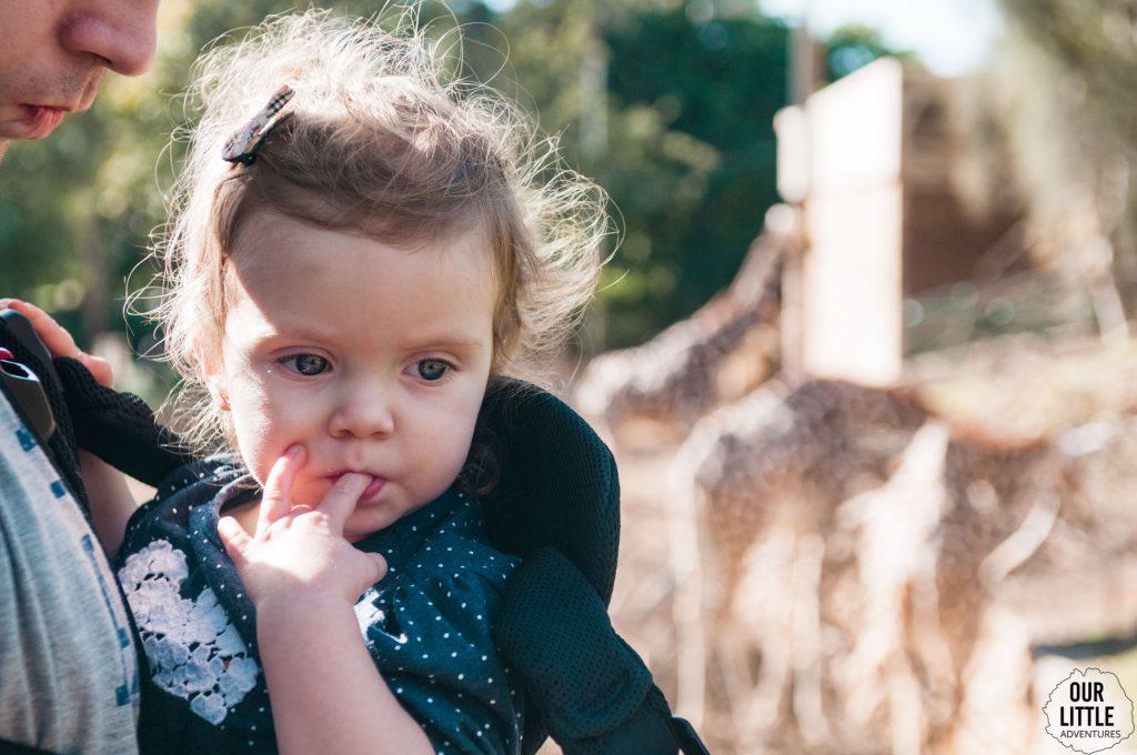 Marianka w nosidle, w tle widoczne żyrafy z zoo w Tel-Awiwie