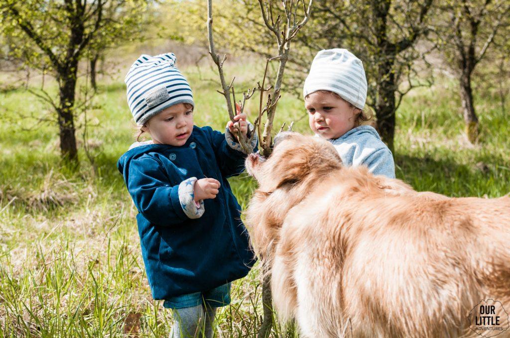Mania bawi się kolegą Guciem drzewem, które gryzie pies Makaron