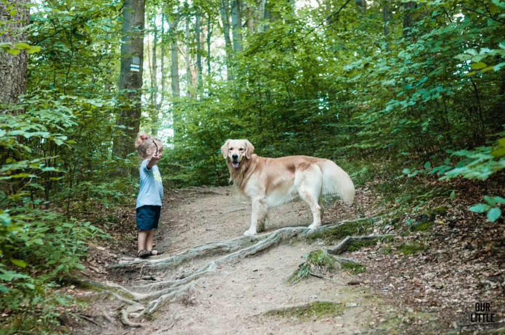 Pies na wakacjach w Lądku Zdrój