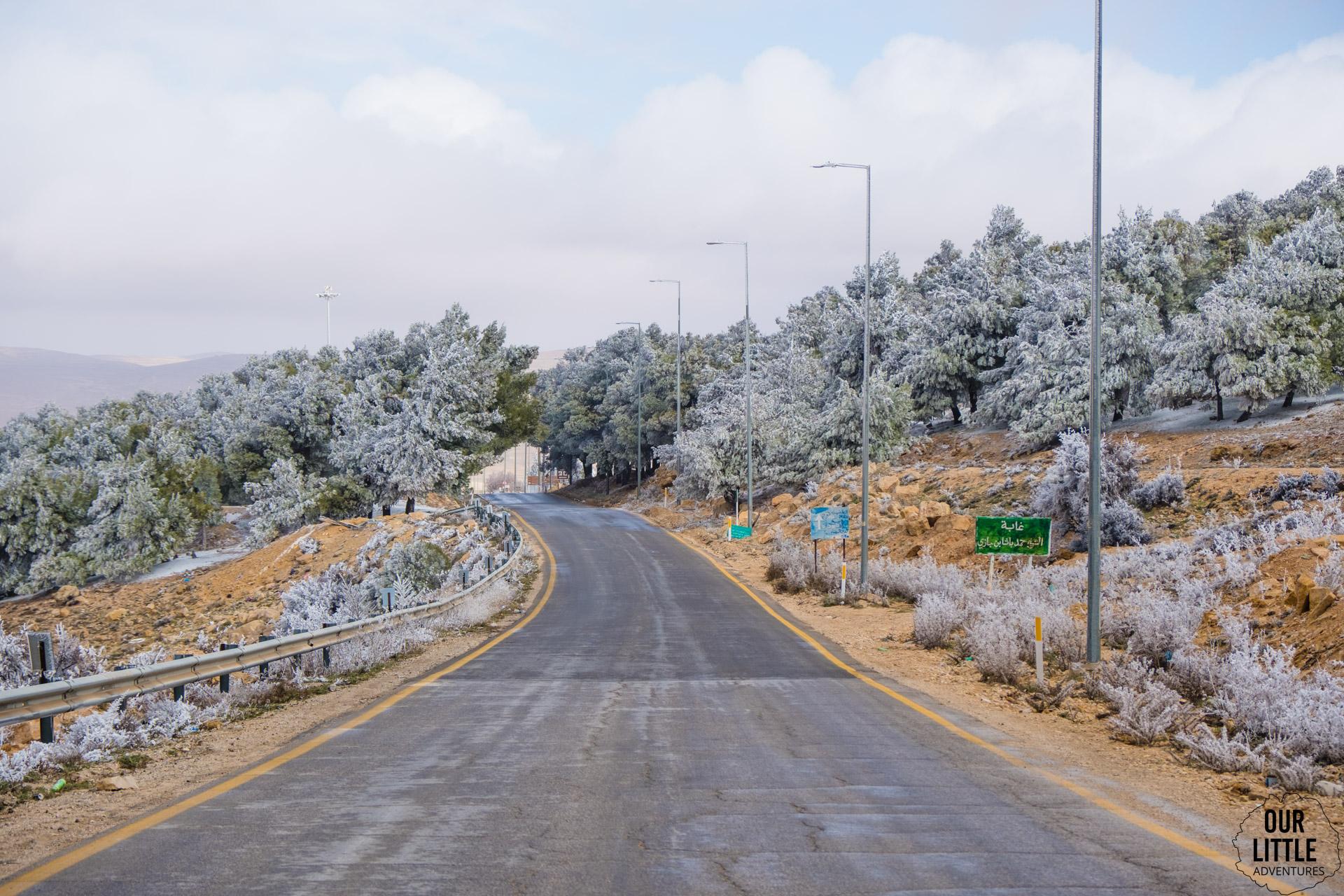 oszronione drzewa w drodze do al karak