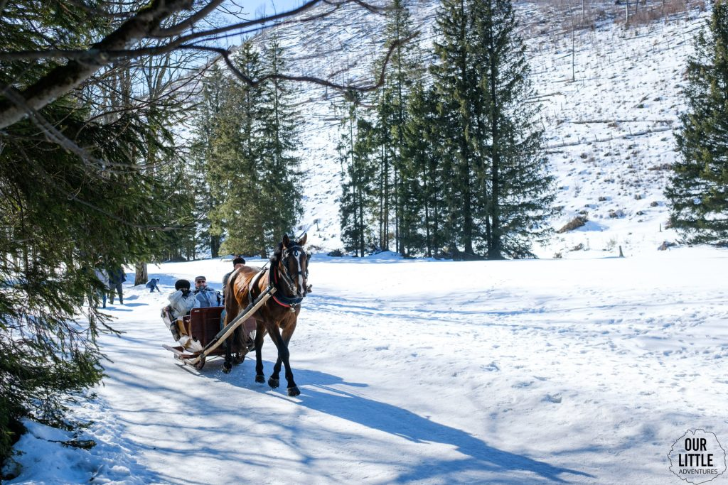 Konie ciągną sanie, Dolina Kościeliska, zdjęcie autorstwa OurLittleAdventures.pl