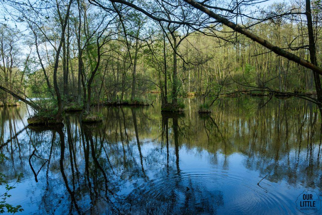 Rezerwat Niebieskie Źródła w Tomaszowie Mazowieckim