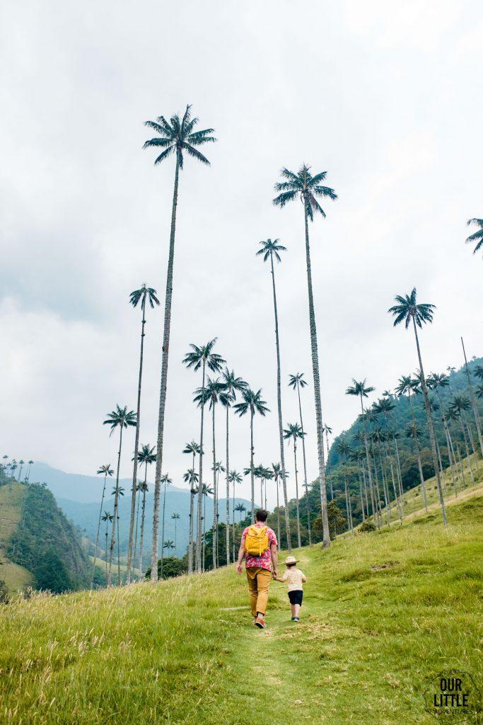 60 metrowe palmy woskowe w Valle de Cocora