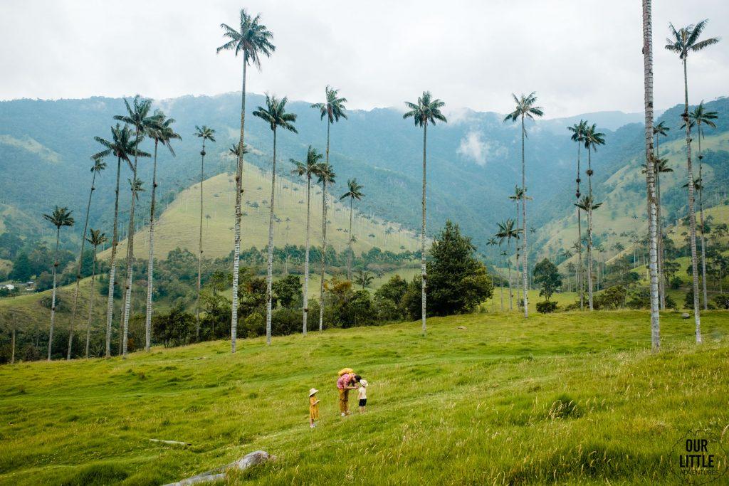 Trekking w dolinie Cocora