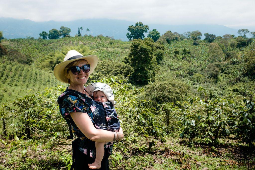 plantacja kawy w Zona Cafetera