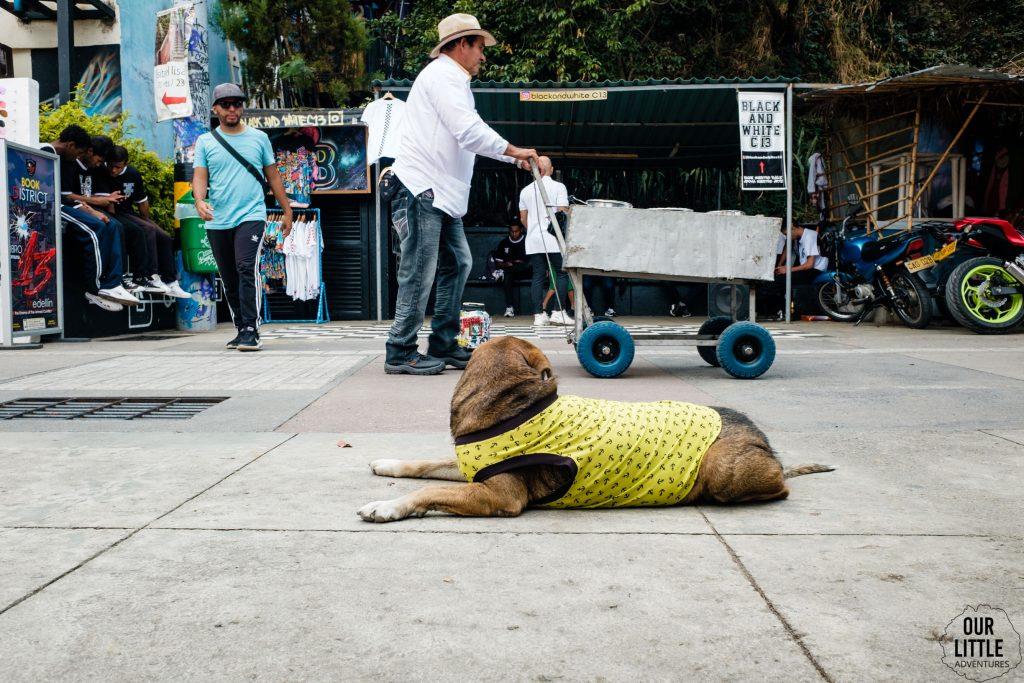 Pies w ubraniu leżący na chodniku w 13 dzielnicy Medellin