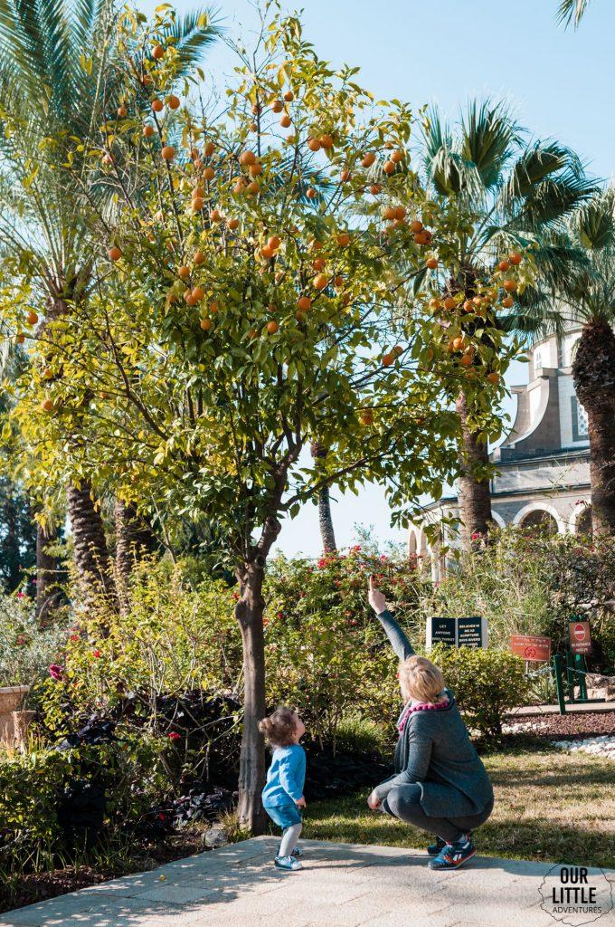Karolina i Marianna pod drzewem pomarańczy na górze Błogosławieństw