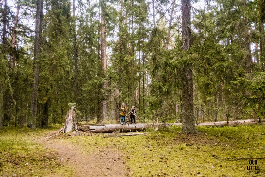 Mania i Jasio stoją na powalonym pniu drzewa w Puszczy Zielonej