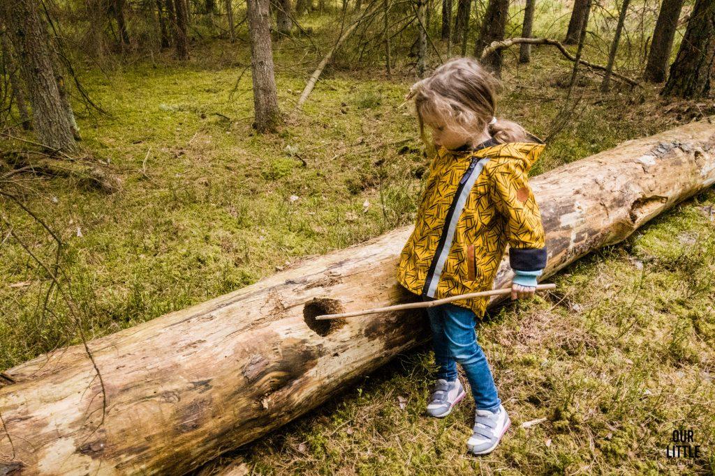 Marianka wkłada w dziurę w pniu drzewa kijek