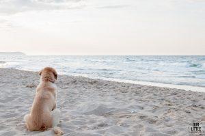 Pies na plaży we Władysławowie