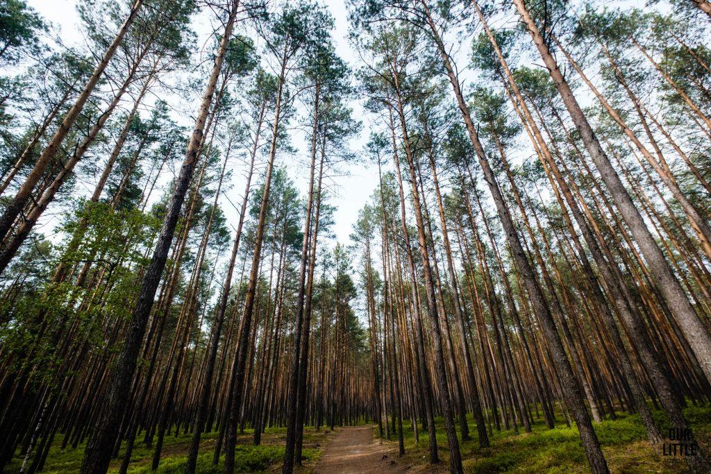 Las na szlaku do wodospadu Jeleń