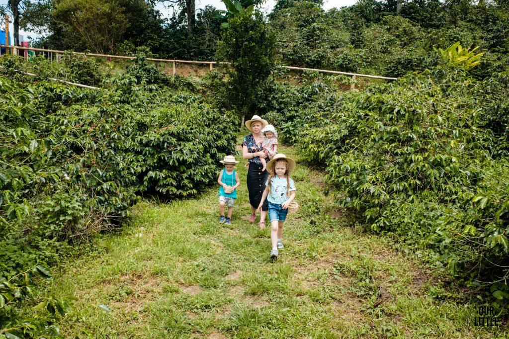 Wycieczka na plantacji kolumbijskiej kawy