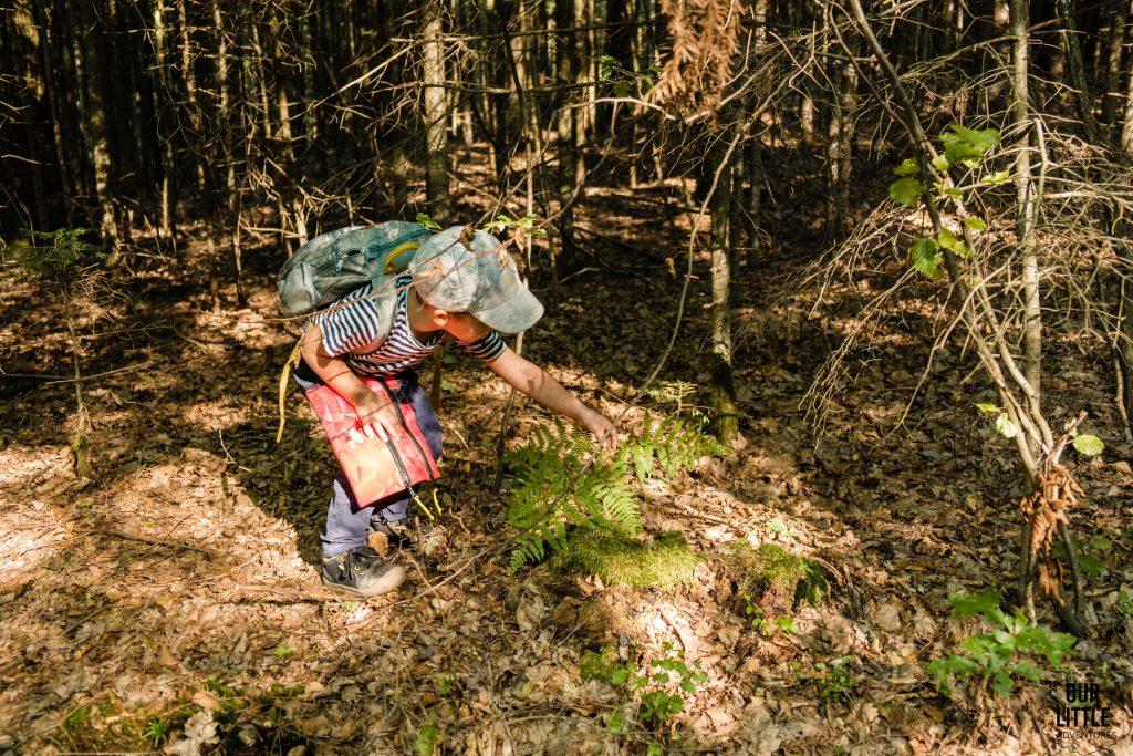 Leśne zabawy na Głównym Szlaku Gór Świętokrzyskich
