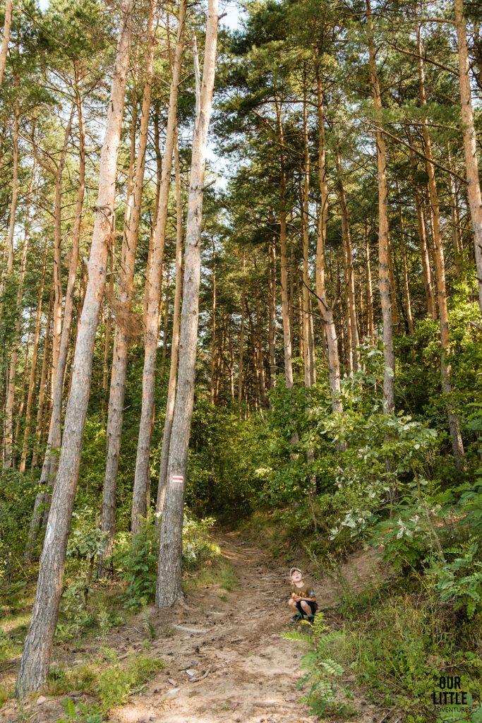 Las sosnowy za Porzeczem na Głównym Szlaku Gór Świętokrzyskich