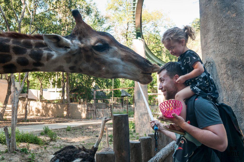 Karmienie żyrafy w ZOO w Chiang Mai