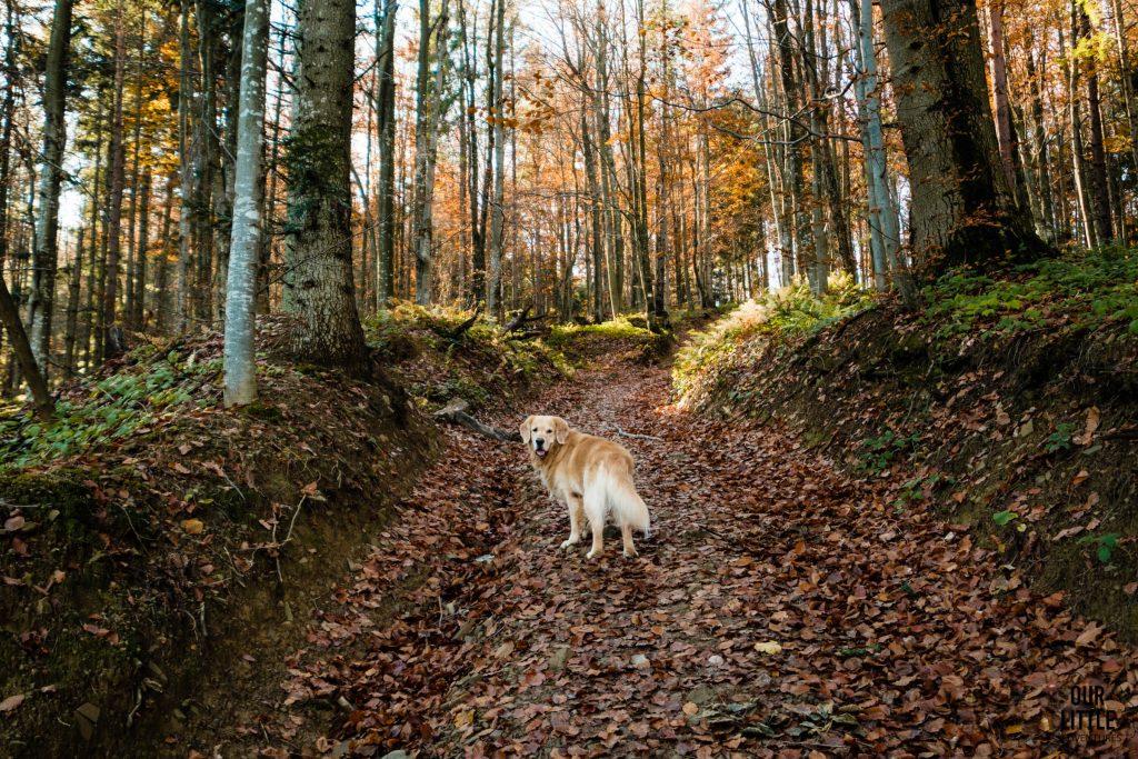 Pies na szlaku na Wielkie Jasło