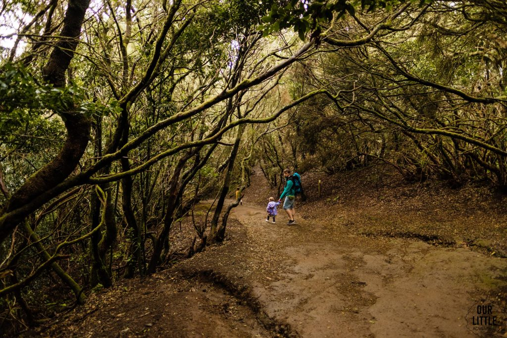 Sandero de los Sentidos - szlak z dziećmi na Teneryfie