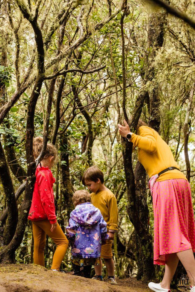 Lasy Wawrzynowe na Teneryfie
