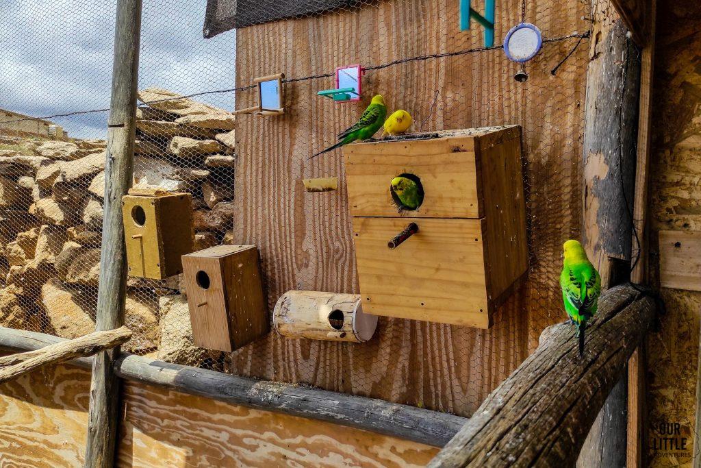 papużki w Sanktuarium dla zwierząt Teneryfie