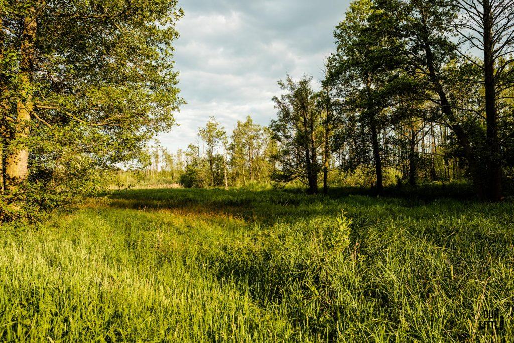 Puszcza Bolimowska, Rezerwat Przyrody Polana Siwica - Our Little Adventures